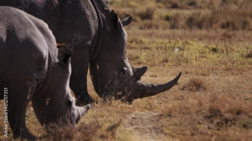 Sticker Rhino in the wild Africa / Mombasa / Kenya Wildlife (RedTech) (Slowmo)