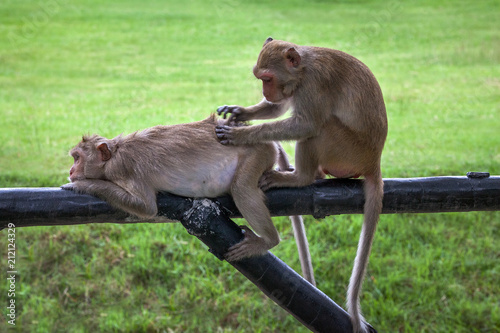 Fotobehang Aap Two cute monkey family.