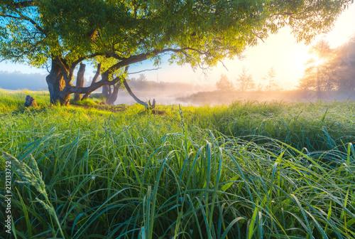 Fotobehang Zomer Summer sunny landscape