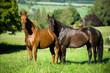 Pferd auf der Koppel - 212137907