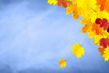 Sunny colorful autumn season leaves decoration on blue sky copy space background. Selective focus used. - 212138757