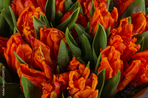 Orange tulips bouquet