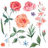 Vintage set of blooming pink roses - 212145590