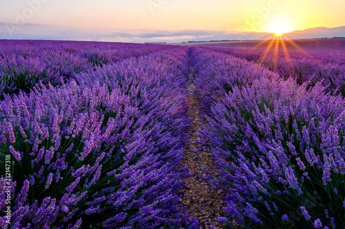 Champ de lavande en fleurs, lever de soleil. Plateau de Valrnsole, Provence, France. © Marina