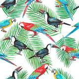 Seamless pattern of tropical birds and leaves (macaws and toukans) - 212152790
