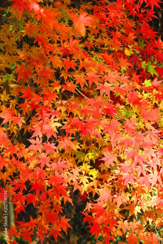 Plexiglas Rood 湖畔の紅葉の風景11