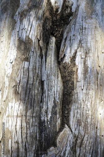 textura árbol - 212170328