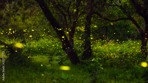 Firefly in the forest tree inside Thai army camp, Prachinburi,  A million fireflies in the wood in Prachinburi - 212172173