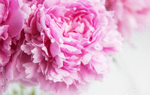 Beauty pink peony flowers - 212177773