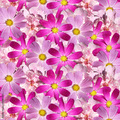 Beautiful floral background with peonies and Cosmo