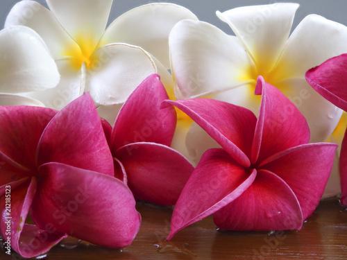 Plexiglas Plumeria Frangipani tropical flowers, Plumeria flowers fresh