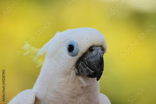 Fototapeta Birds, the freedom