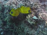Unterwasserfotografie am Roten Meer