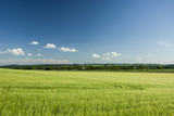 Barley field and forest on the horizon - 212205900