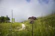 violetta montana con sfondo di prato verde e cielo nuvoloso