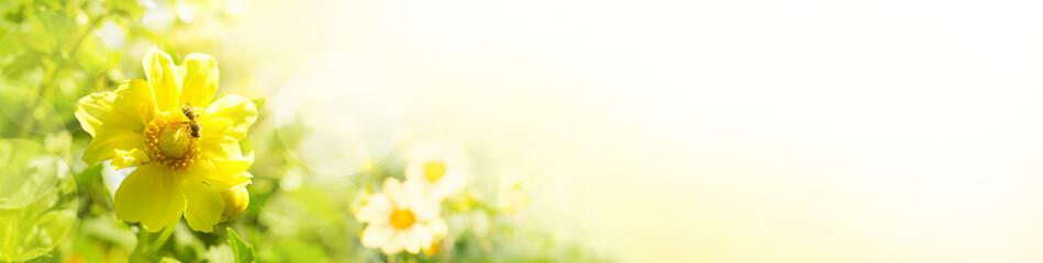 Sommerblumen im Garten  -  Panorama © Floydine