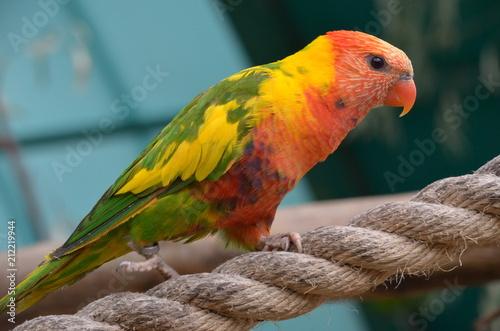 Fotobehang Papegaai попугай