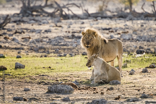 Fototapeta Etosha, Namibia