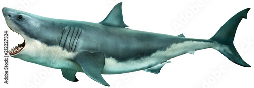 Great white shark side view 3D illustration