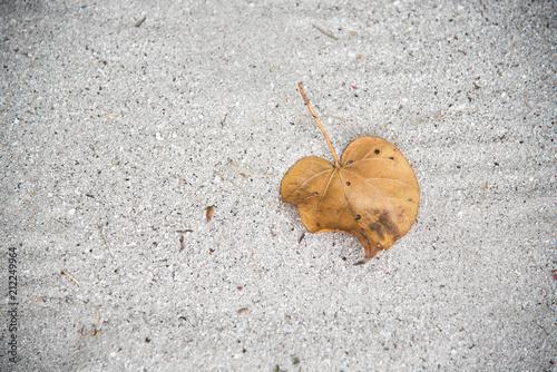 Fotobehang Stenen Leaf on the sand