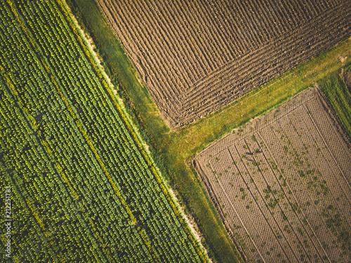 Plakat sunflowers fields