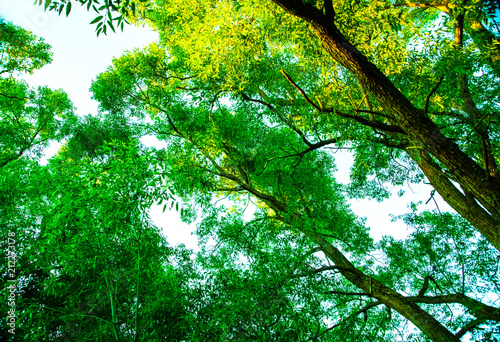 Fotobehang Groene Sergiev Posad,Moscow region, Russia-02 July-2018: natural parks of the Moscow region