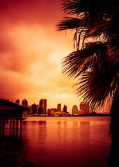 Beautiful sunset over San Diego skyline with bay and palm trees