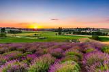 Fresh lavender field at sunset - 212280906
