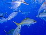 School of Fish Swimming in Blue Ocean - 212287198