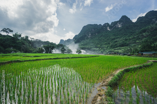 Fotobehang Groen blauw Rice field waterfall and mountains