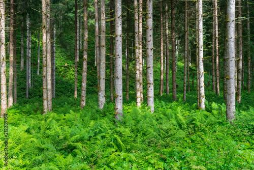 Markante Bäume