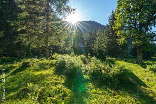 Foto Murales Waldlichtung mit Hütte