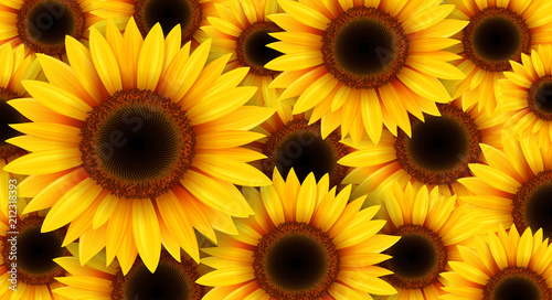 Sunflowers background, summer flowers vector illustration. - 212318393
