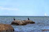 Am Strand von Kap Arkona auf Rügen - 212319584