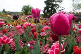 Insel Mainau - Blumen, Schmetterlinge - 212320901