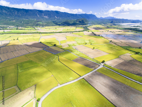 aerial view of rice field .Taiwan. - 212325511