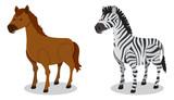 Horse and Zebra on White Background - 212334965