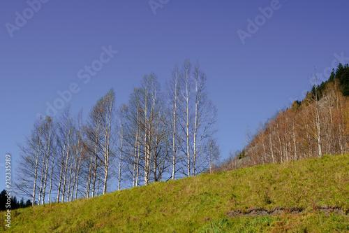 Plexiglas Herfst dry trees