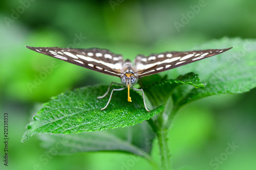 Closeup  beautiful butterfly & flower in the garden. - 212338353