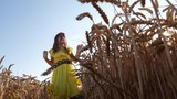 Have fun on nature - kid girl in yellow dress jumping in wheat field harvest in slow motion - 212348191