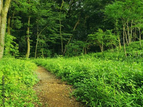 森林と散策路
