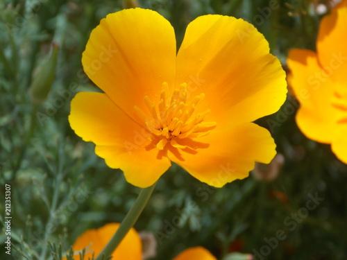 Foto Murales fleur