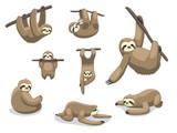 Sloth Poses Cartoon Vector Illustration - 212355926
