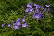 fiori delle prealpi