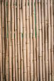 Natural Bamboo Fence © Jason Stitt