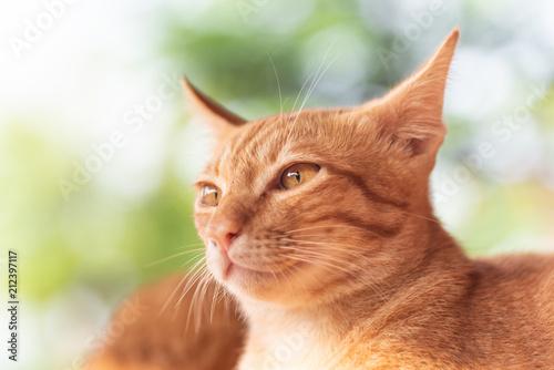Fotobehang Kat Ginger cat looking for something