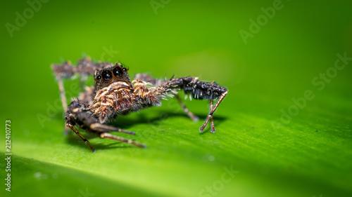 Fototapeta Spider On Green Leaf