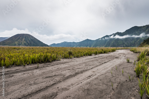 path through grassland under cloudy sky with mountain as background