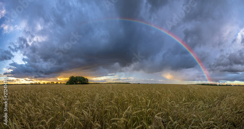 Leinwanddruck Bild rainbow over the field after a morning downpour