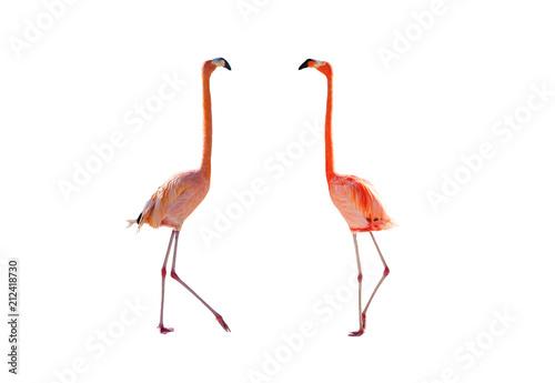 Różowi flamingi odizolowywający na białym tle